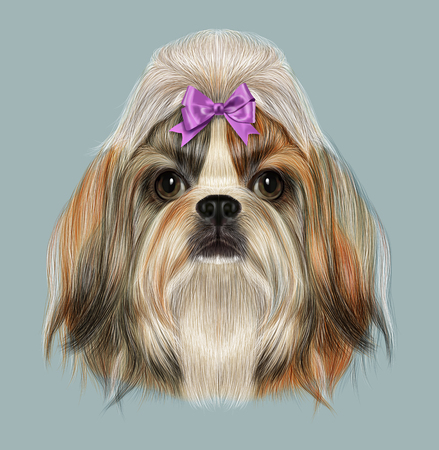 shih: Illustrated Portrait of Shih Tzu Dog. Domestic toy dog breed. Tricolor dog with pink bow. Stock Photo