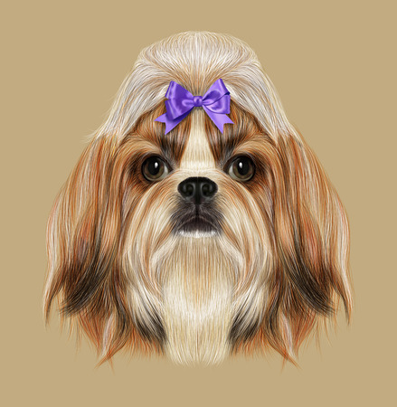 shih: Illustrated Portrait of Shih Tzu Dog. Domestic toy dog breed. Tricolor dog with violet bow.