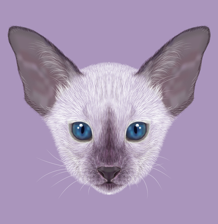 asian cartoon: Illustrated Portrait of Kitten. Siamese Kitten. Lilac point with blue eyes on violet background.