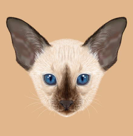 siamese: Illustrated Portrait of Kitten. Siamese Kitten. Chocolate point cat with blue eyes on tan background. Stock Photo