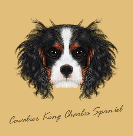 charles: Cavalier King Charles Spaniel on beige background.