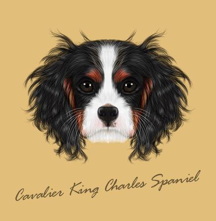 Cavalier King Charles Spaniel on beige background.