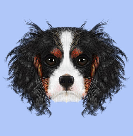 charles: Cavalier King Charles Spaniel on blue background.