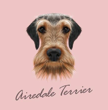 airedale terrier: Vector illustrated Portrait of Airedale Terrier on pink background
