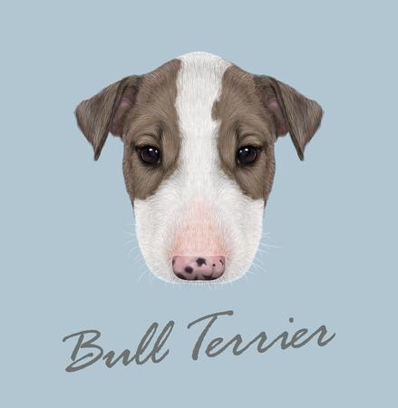boston bull terrier: Vector illustrated Portrait of  Bull Terrier Puppy on blue background. Illustration