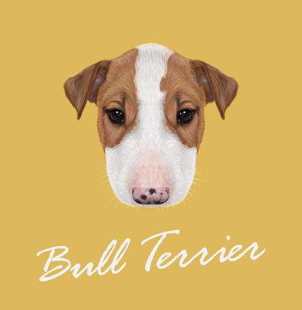blue and white: Vector illustrated Portrait of  Bull Terrier Puppy on yellow background.