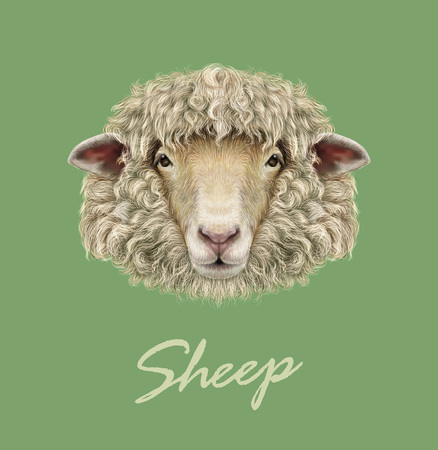 Vector illustrated Portrait of  Ram or sheep on green background. Illustration