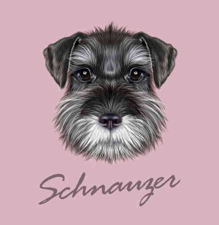 Vector illustrated Portrait of  Black Schnauzer on pink background Stock Illustratie