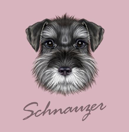 dog ear: Vector illustrated Portrait of  Black Schnauzer on pink background Illustration