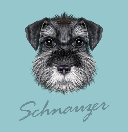 white coat: Vector illustrated Portrait of  Black Schnauzer on blue background.