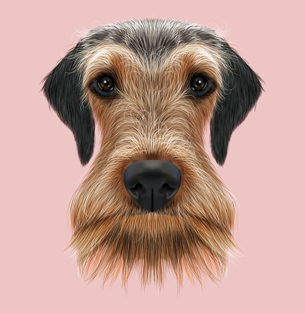 british bulldog: Illustrated Portrait of Airedale Terrier on pink background