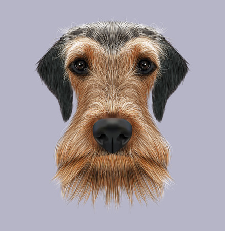 nose cartoon: Illustrated Portrait of Airedale Terrier on pink background
