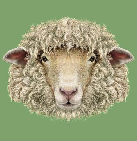 Illustré Portrait de Ram ou de mouton sur fond bleu