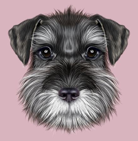 Illustrated Portrait of  Black Schnauzer on pink background 스톡 콘텐츠
