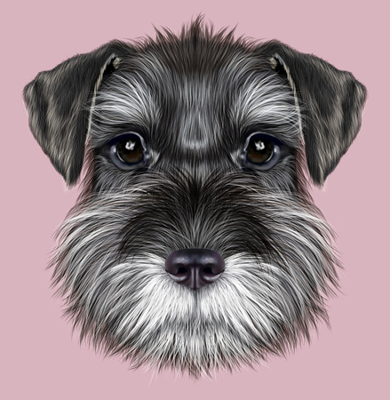 Illustrated Portrait of  Black Schnauzer on pink background Banco de Imagens