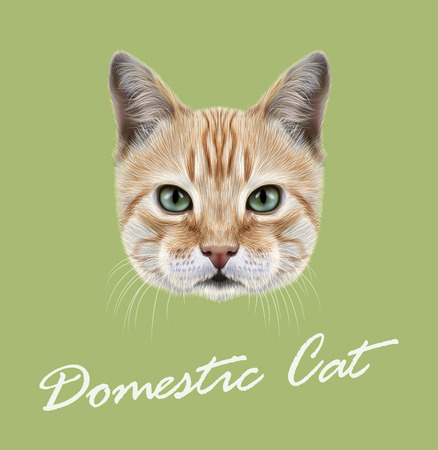 Vector Illustrated Portrait of Domestic Cat on green background.