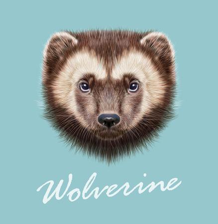 wolverine: Vector Illustrated Portrait of Wolverine on blue background. Illustration