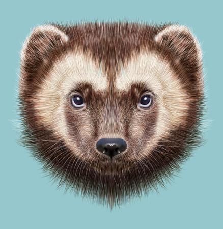 wolverine: Illustrated Portrait of Wolverine on blue background. Stock Photo