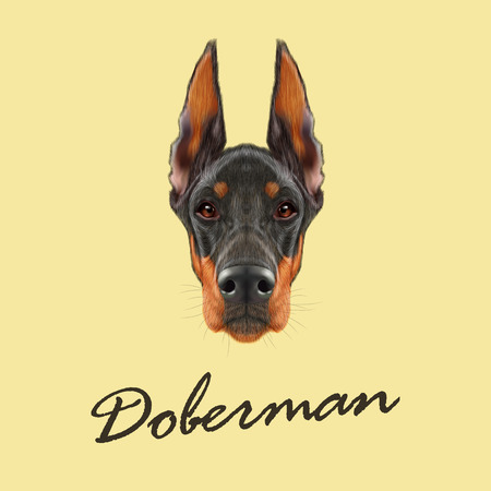 brown dobermann: Vector illustrated portrait of black dog on yellow background. Illustration