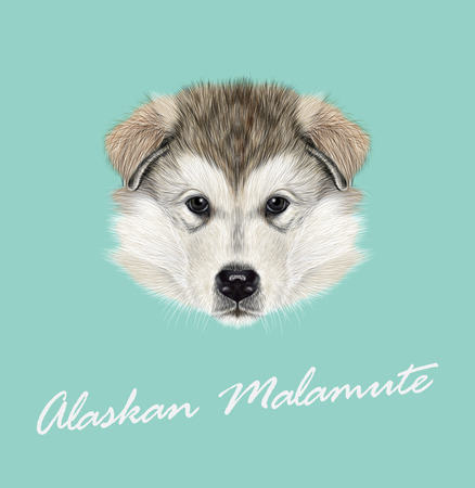 Vector illustrated Portrait of Puppy on blue background.
