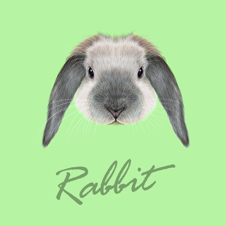 coney: Vector Illustrated portrait of blue point Rabbit on green background. Illustration