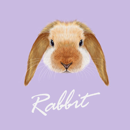 Vector illustrated portrait of red point Rabbit on violet background. Ilustração