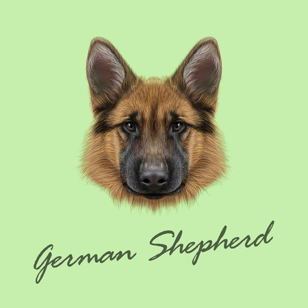 Vector Illustrated portrait of dog on green background. Vettoriali