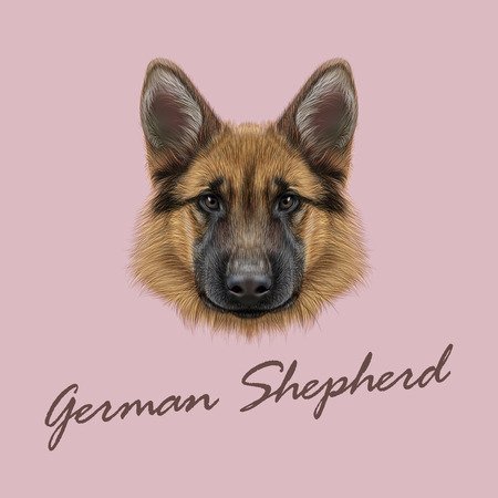 Vector illustrated portrait of dog on pink background.