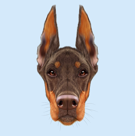 brown dobermann: Illustrated portrait of red dog on blue background. Stock Photo