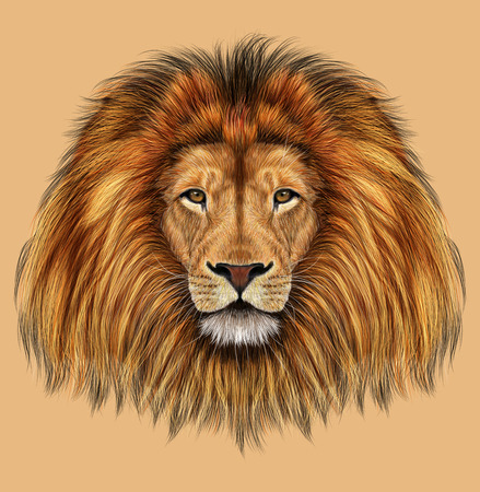 tan: Illustrated portrait of Lion on tan background