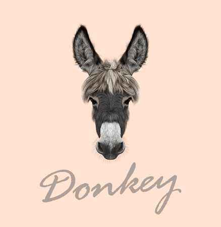 Vector illustrated portrait of grey Donkey on pink background