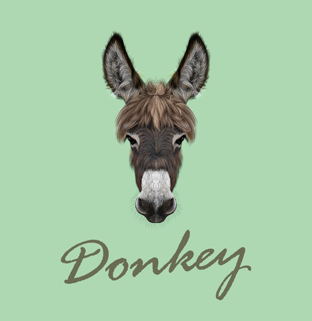 Vector illustrated portrait of brown Donkey on green background Ilustracja