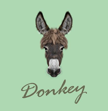 burro: Vector ilustrado retrato de burro marr�n sobre fondo verde