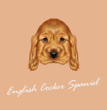 dog ear: Vector illustrated portrait of red English Cocker Spaniel dog on tan background