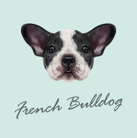 Vector geïllustreerd portret van de zwart-wit gevlekte Franse Bulldog hond op een blauwe achtergrond. Stock Illustratie