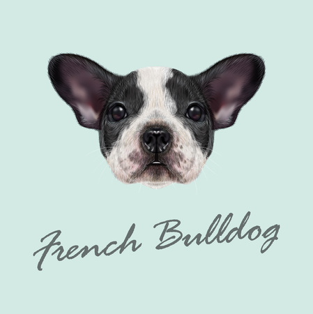 terrier: Vector illustrated portrait of black and white spotted French Bulldog dog on blue background.