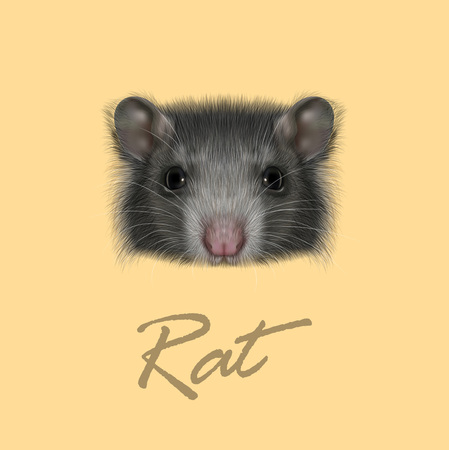 Vector illustrated portrait of grey Rat on yellow background