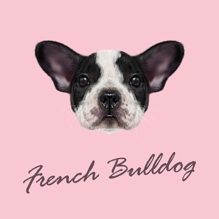 spotted dog: Vector illustrated portrait of black and white spotted French Bulldog dog on pink background. Illustration