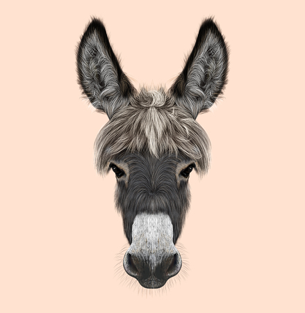 Illustrated portrait of grey Donkey on pink background