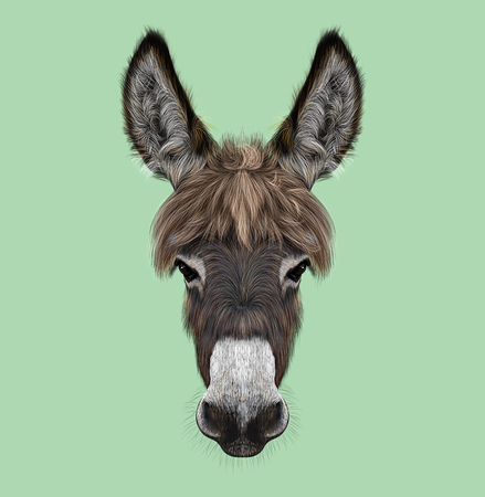 Illustrated portrait of brown Donkey on green background Stockfoto