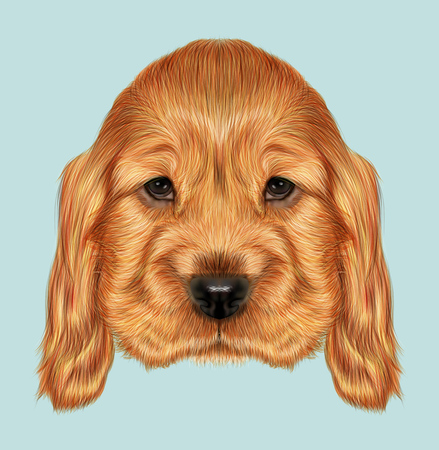 cocker spaniel: Illustrated portrait of red English Cocker Spaniel dog on blue background
