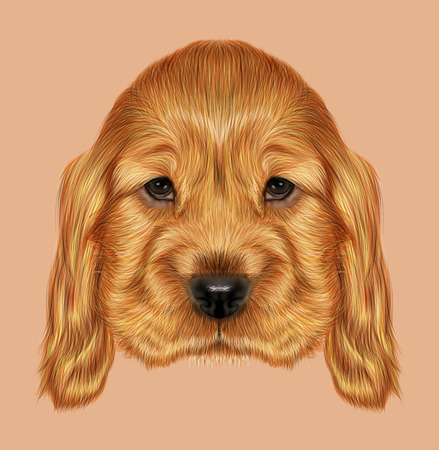 cocker: Illustrated portrait of red English Cocker Spaniel dog on blue background