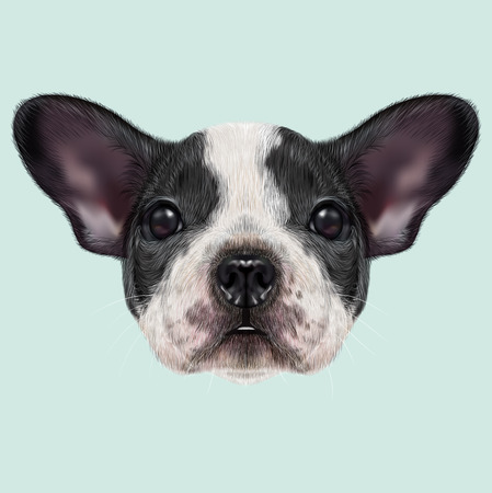 spotted dog: Illustrated portrait of black and white spotted French Bulldog dog on blue background.