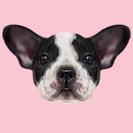 dog ear: Illustrated portrait of black and white spotted French Bulldog dog on pink background.