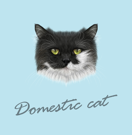 Vector Illustrated Portrait de chat noir et blanc sur fond bleu.