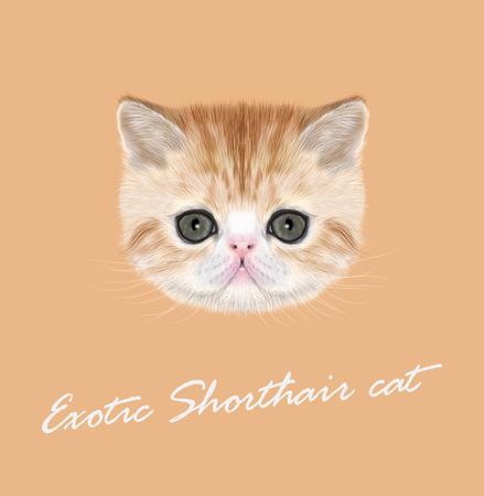 Vector Illustrated Portrait of red tabby kitten on orange background