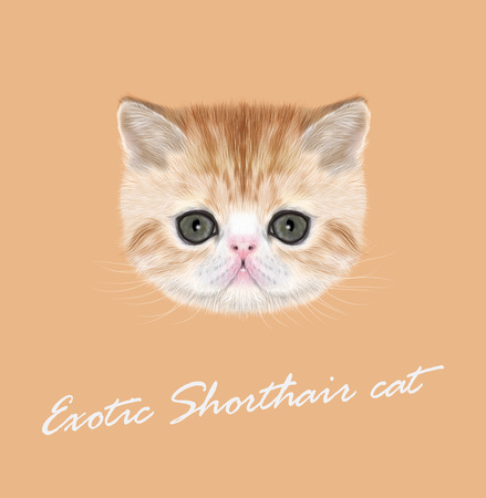 abyssinian: Vector Illustrated Portrait of red tabby kitten on orange background