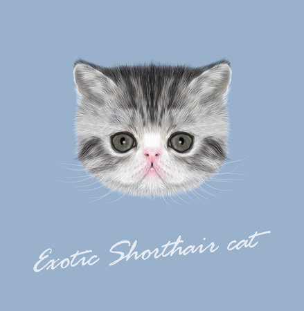 abyssinian: Vector Illustrated Portrait of black tabby kitten on blue background Illustration