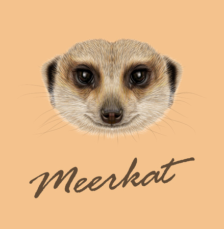 Vector illustrated Portrait of African Meerkat on tan background.