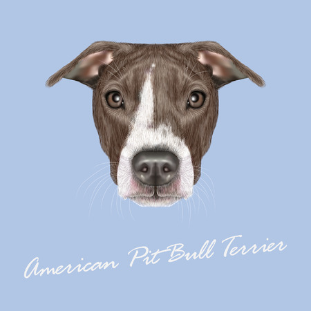 pit: Vector illustrated portrait of Dog on blue background